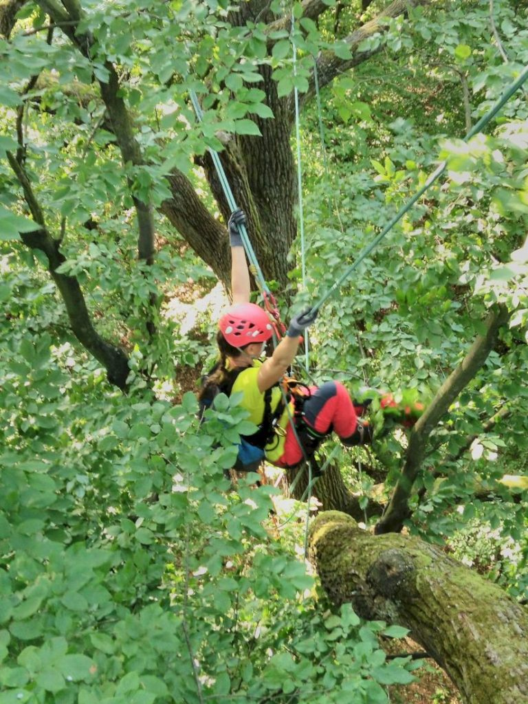 misja-drzewa-wspinaczka-drzewna-13