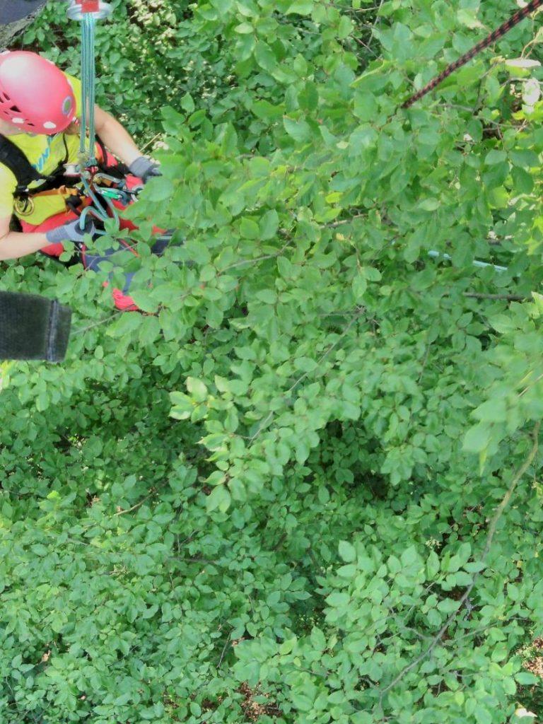 misja-drzewa-wspinaczka-drzewna-16