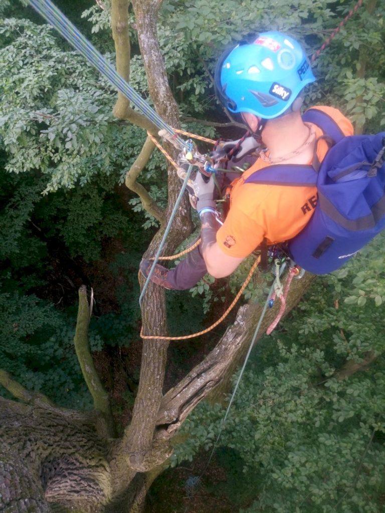 misja-drzewa-wspinaczka-drzewna-6